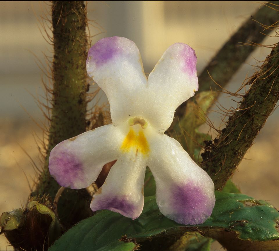 A new genus of flower from Vietnam